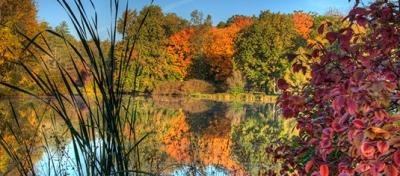 Fall leaves at the Morton Arboretum