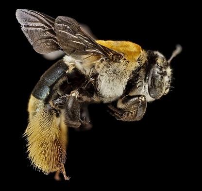 beautiful-bee-biology-259611_0.jpg