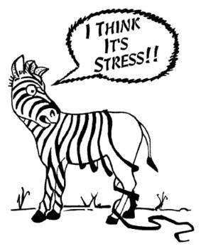 zebra_stress.jpg