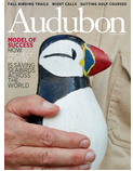 audobon magazine.PNG
